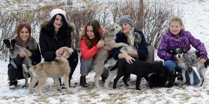 Дочь Кевина Даллмэна начала сбор пожертвований для организации приюта для бездомных животных